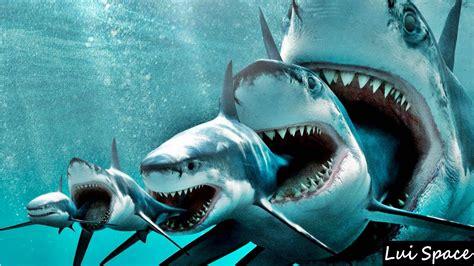 ¡Wow! Conoce los animales más grandes del océano. ¡Son ...