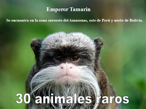 X Animales Raros |authorSTREAM