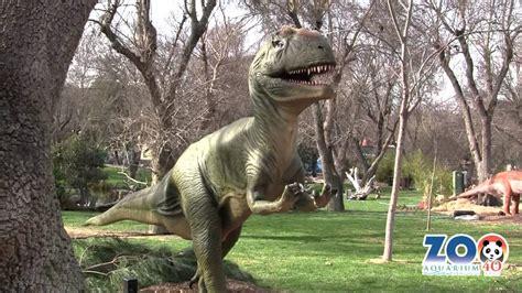 Ya están aquí... | Zoo Aquarium Madrid   YouTube