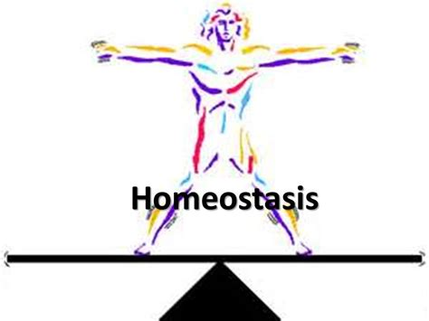 Year 12 Applied Science 1D Homeostasis unit inc. diabetes ...