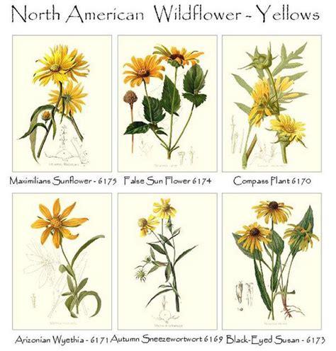 Yellow Wildflowers | Yellow wildflowers, Daisy painting ...