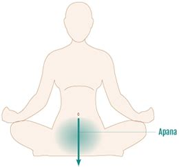 Yoga for pelvic floor muscles: do you need to strengthen ...