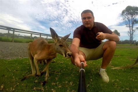 Zdjęcia: Mini Zoo, Okolice Sydney, Selfie z kangurem ...
