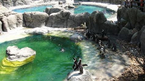 Zoo Animals   Picture of Zoo Aquarium de Madrid, Madrid ...