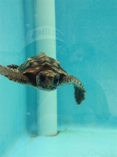 Zoo | Animals | Pittsburgh | Turtle | Pittsburgh zoo, Zoo ...