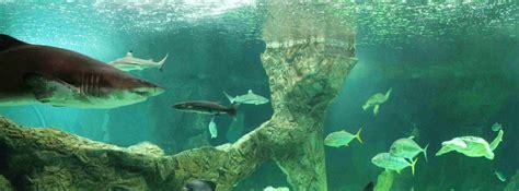 Zoo Aquarium de Madrid  1 día, 1 parque    Madrid