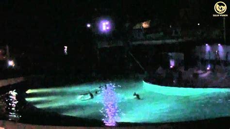 Zoo Aquarium de Madrid   Espectáculo de delfines  Noches ...