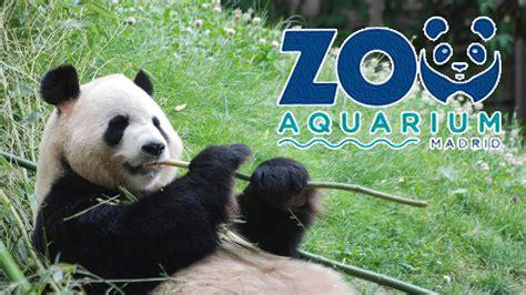 Zoo Aquarium De Madrid   Fuzzbeed HD Gallery