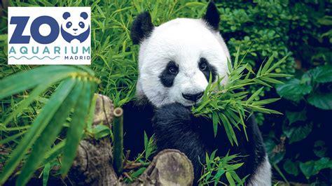 Zoo Aquarium De Madrid Tickets   Event Dates & Schedule ...