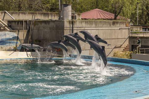 Zoo Aquarium de Madrid   Viajeros por el Mundo