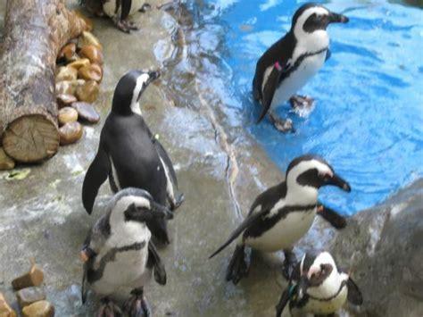 Zoo Aquarium Madrid   SEO POSITIVO