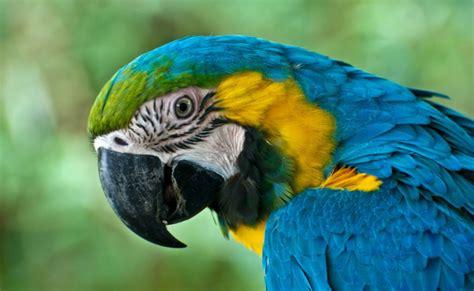 Zoo Ave | Villa San Ignacio | Hotel near San Jose and ...