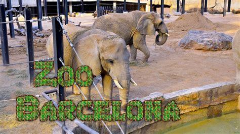 Zoo Barcelona  4K   YouTube