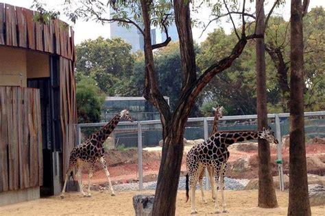 ZOO BARCELONA   Animales, Orario y Entradas Parque ...