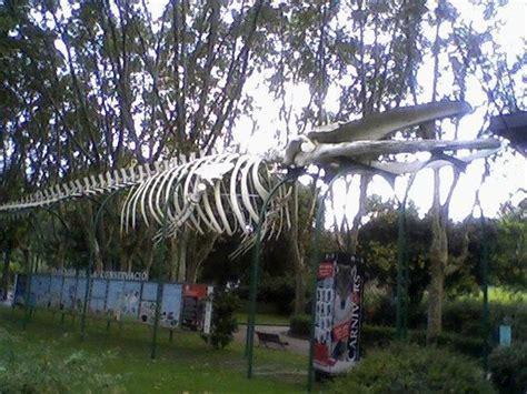 ZOO Barcelona   Picture of Barcelona Zoo, Barcelona ...