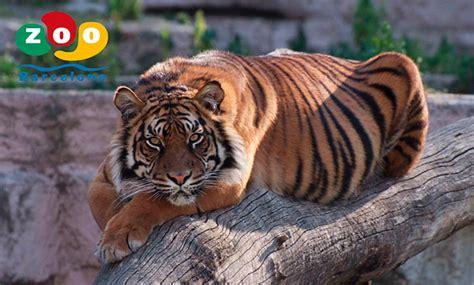 Zoo Barcelona   TicketsNET   Venta de Entradas OnLine al ...