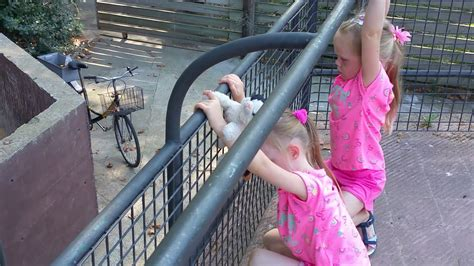 Zoo Barcelona   YouTube