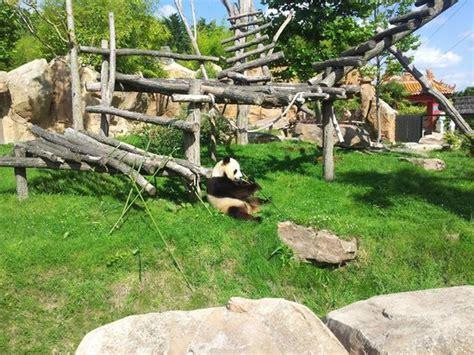 ZOO BEAUVAL   Photo de ZooParc de Beauval, Saint Aignan ...