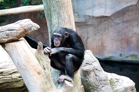 Zoo bioparc en Fuengirola
