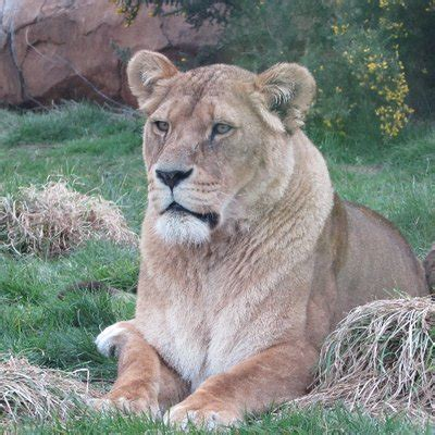 Zoo Cast UK on Twitter:  Great events at @drusillaspark ...