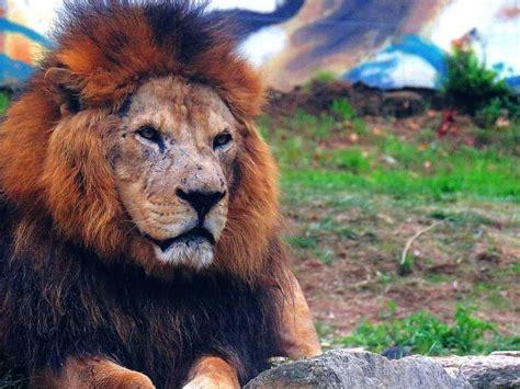 Zoo da Maia com entrada livre a 23 de Dezembro   Notícias Maia