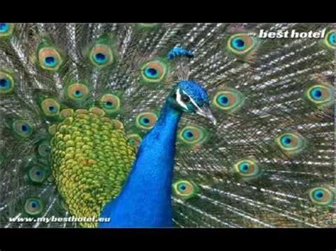 Zoo da Maia   Jardim Zoologico da Maia   YouTube