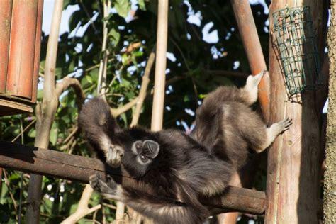 Zoo da Maia