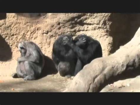 ZOO DE BARCELONA  ANIMALES    Part 1.wmv   YouTube