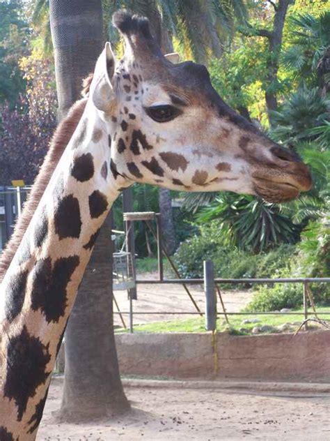 Zoo de Barcelona   Barcelona   Delfinario Barcelona ...