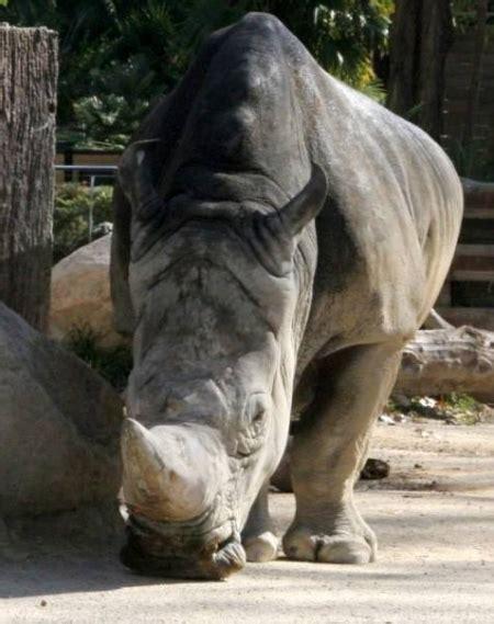 Zoo de Barcelona descuentos, ofertas, promociones y ...