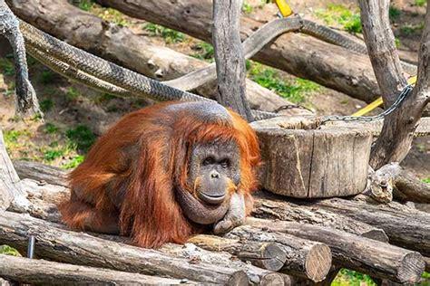 Zoo de Barcelona | Dierentuin Barcelona bezoeken