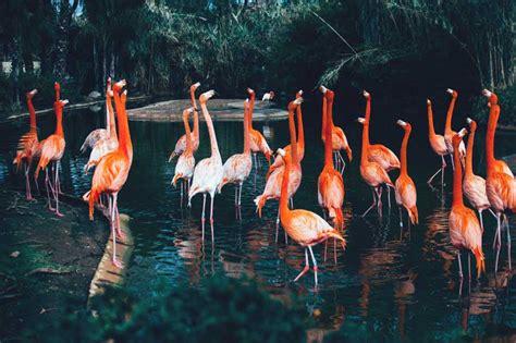 Zoo de Barcelona en Barcelona | Pequeocio