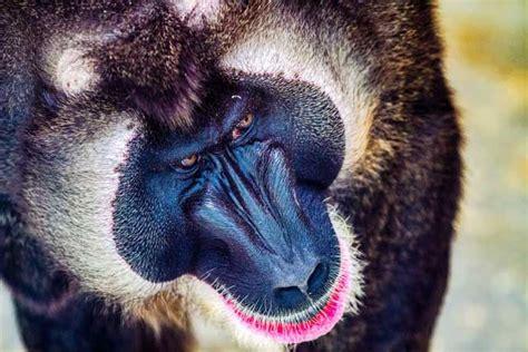 Zoo de Barcelona en Barcelona  ¡toma nota!  | Pequeocio
