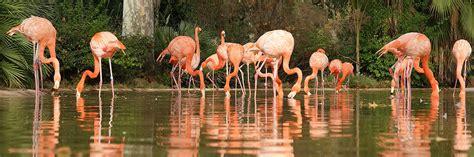 Zoo de Barcelona   Horario, precio y ubicación en Barcelona