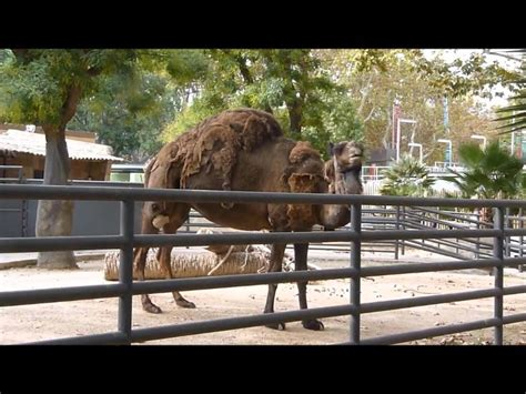 ZOO DE BARCELONA. muchos animales. .wmv   YouTube