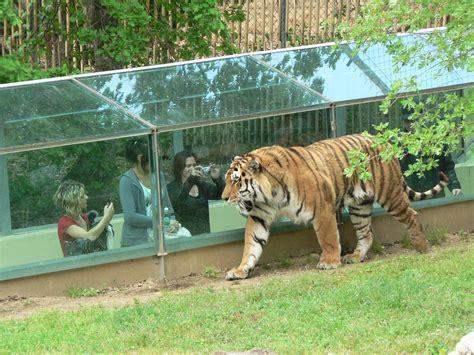 Zoo de France : top 5 des plus beaux parcs animaliers ...