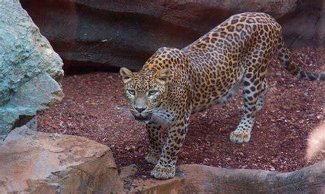 Zoo de Fuengirola   Manilva WebSite