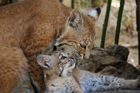Zoo de Lagos, Algarve