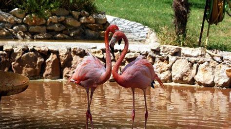 Zoo de Lisboa: qué ver, cómo llegar, horarios y precios