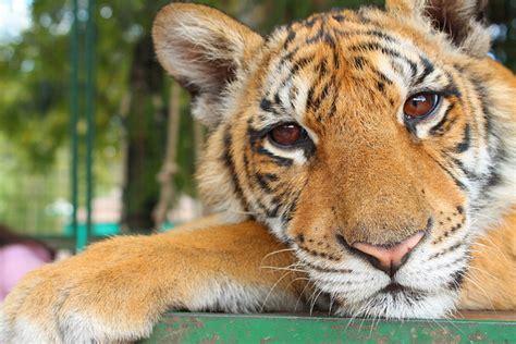 Zoo de Lujan, precios accesibles