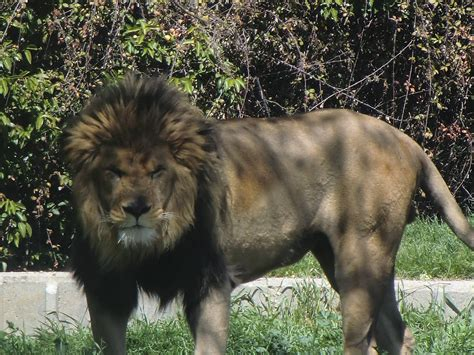 Zoo de Madrid: busca tu animal | Haz Turismo