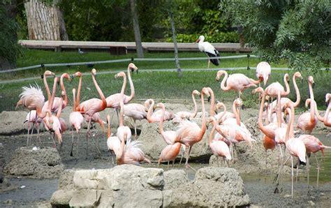 Zoo de Madrid, lo que tienes que saber antes de ir ...