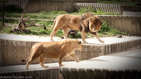 Zoo de Madrid