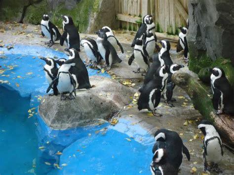 zoo de madrid   Photo de Zoo Aquarium de Madrid, Madrid ...