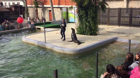 Zoo de Maia  Porto. Nico, el Leon marino   YouTube