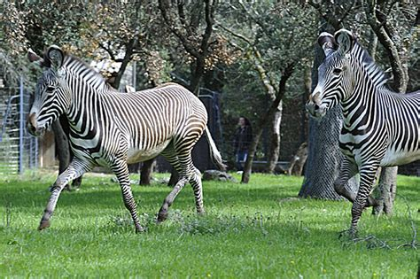 Zoo de montpellier, Zoo   parc animalier   Tourisme ...