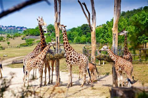 Zoo de Praga, visitas, horarios, precios y dirección ...