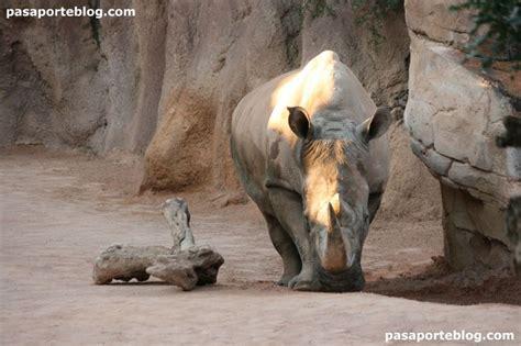 Zoo de Valencia, un lugar para visitar  con imágenes ...