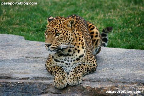 Zoo de Valencia, un lugar para visitar | Zoo, Valencia ...