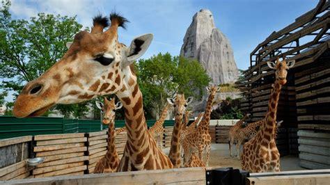 Zoo de Vincennes: adoptez une girafe
